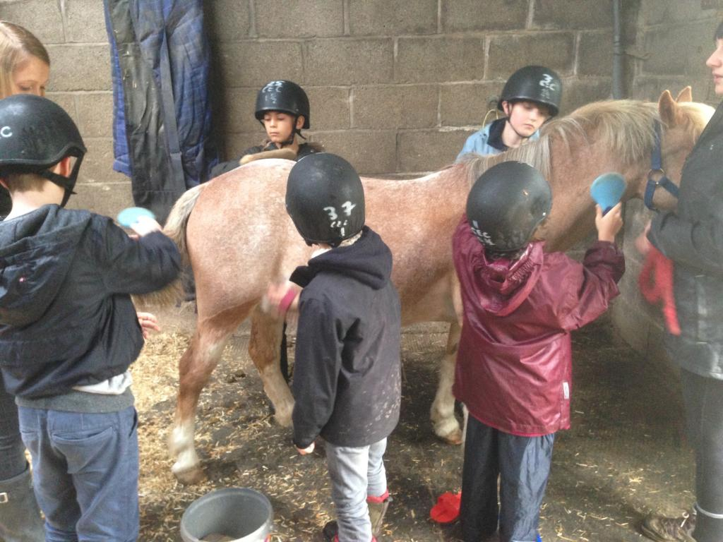 Learning how to care for a horse