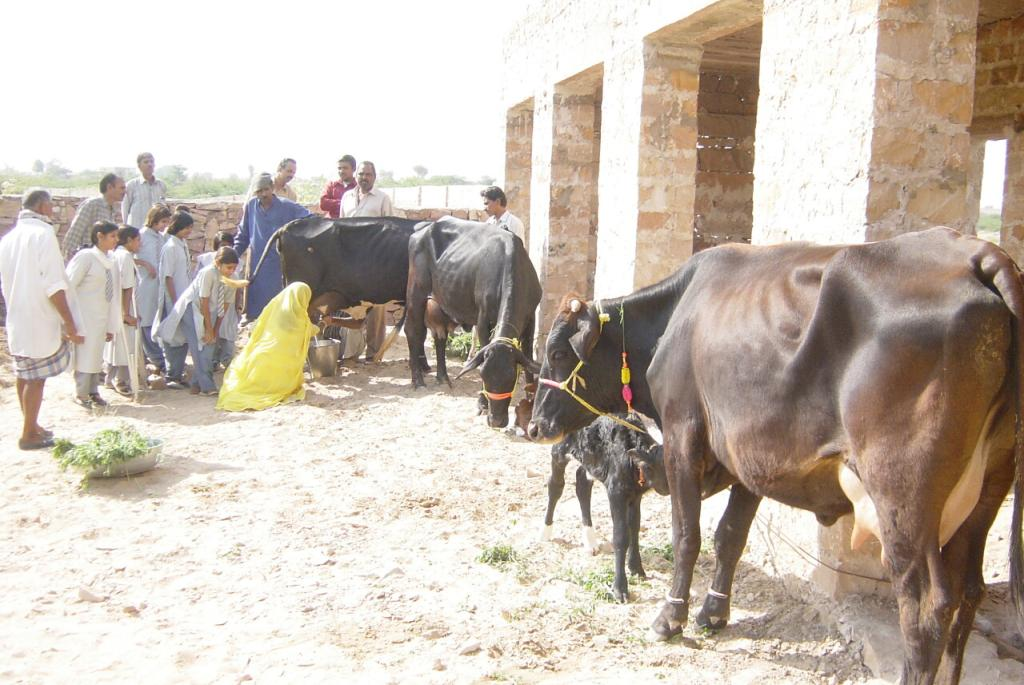 Learning how to milk cows - and achieve self-sufficiency