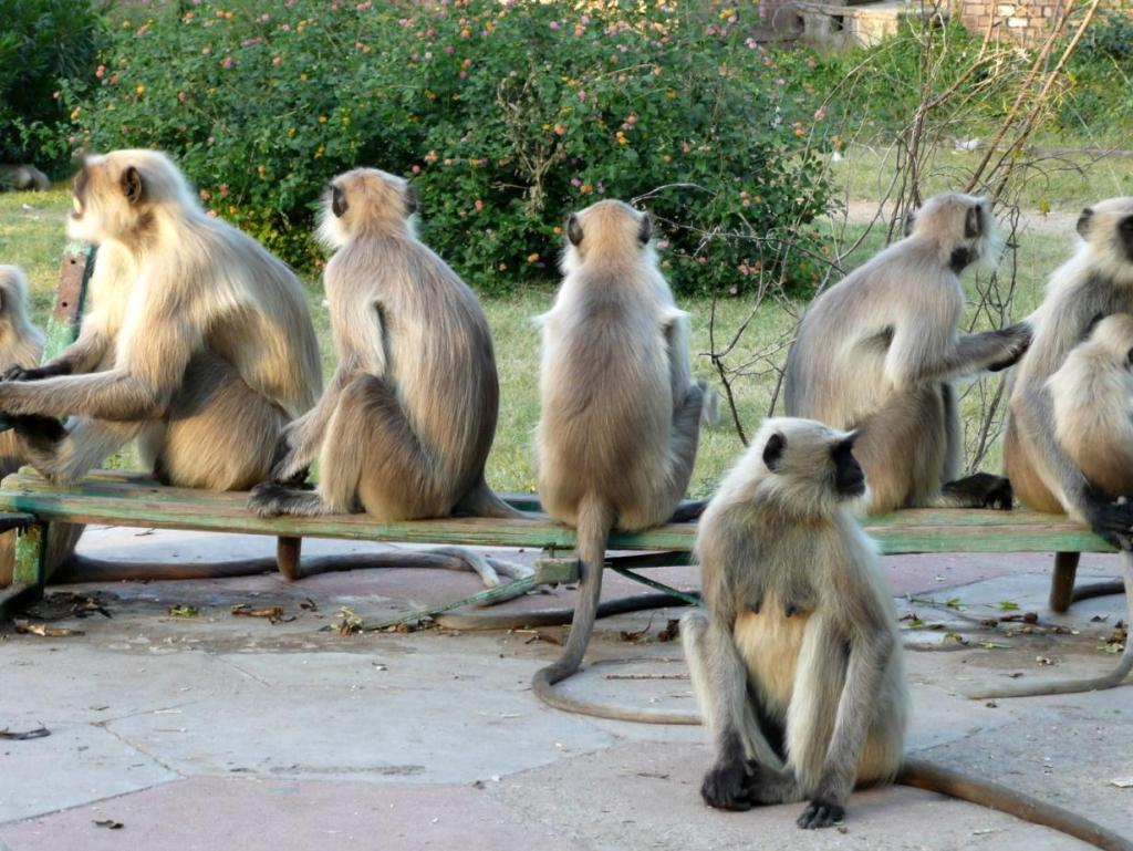. . . home to numerous monkeys