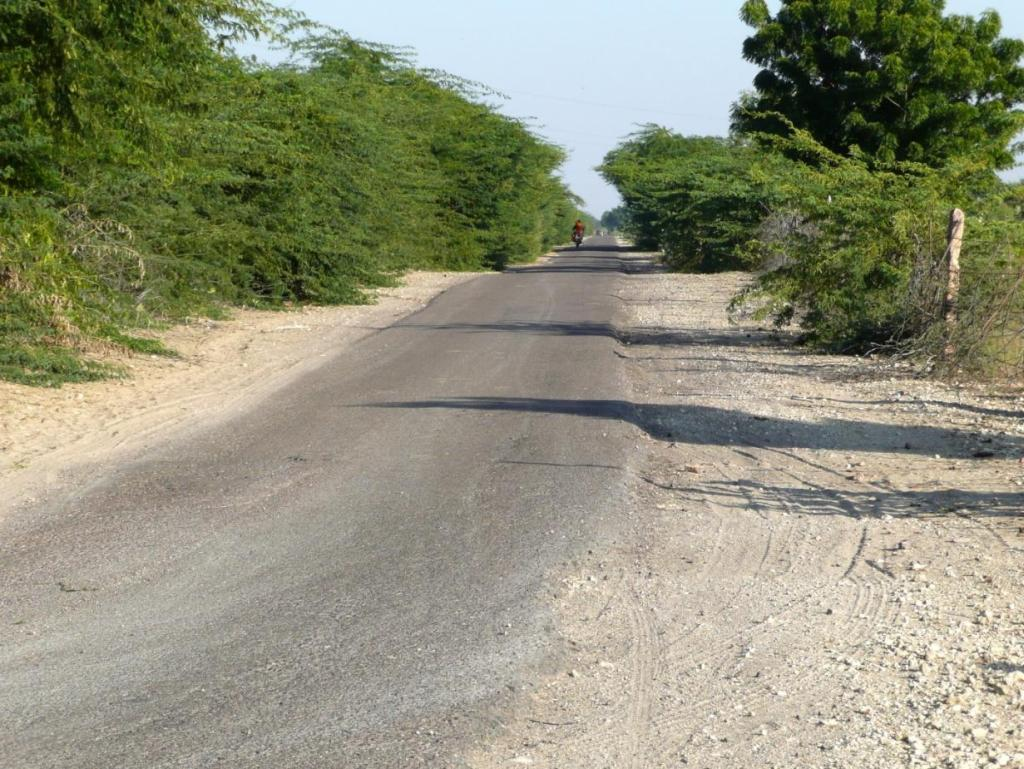 The road leading to the carrot farm